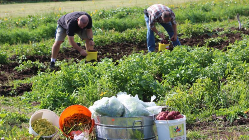 Identifying and Countering White Supremacy Culture in Food Systems from Duke Sanford's World Food Policy Center
